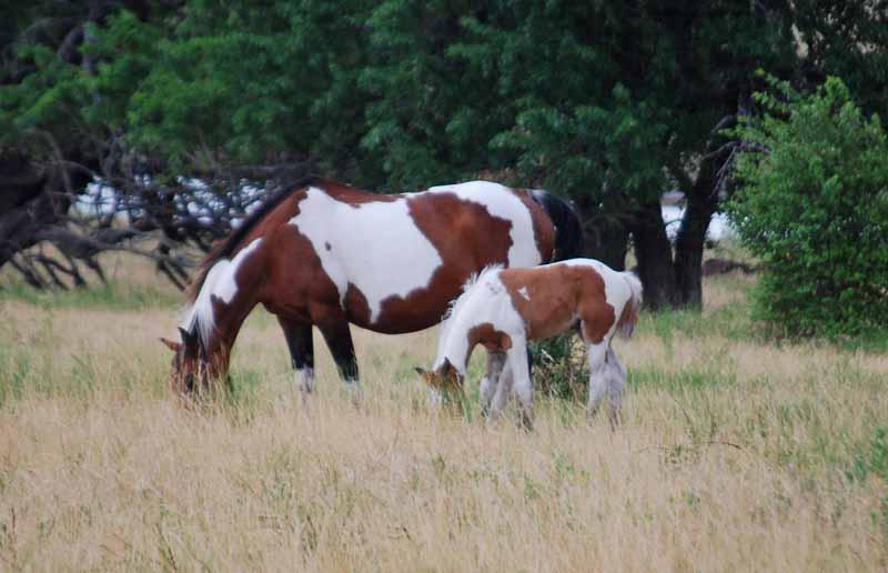 HorsesJul26