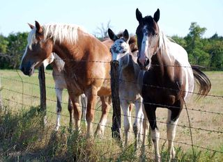 HorsesJul26c