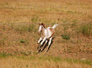 FoalAug27