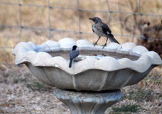 BirdsbathAug27