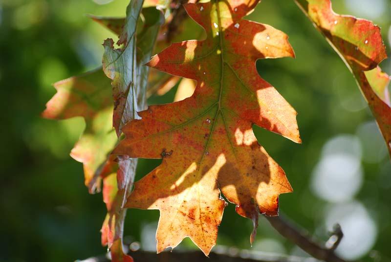 LeavesOct31
