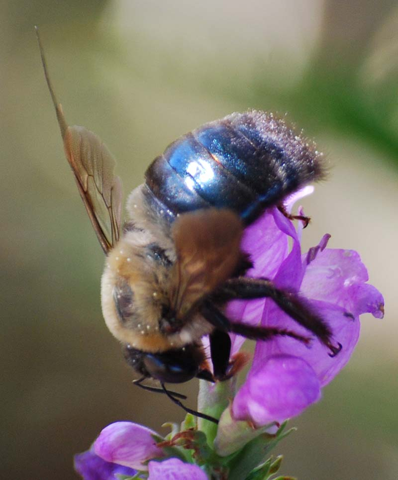 BeeOct2