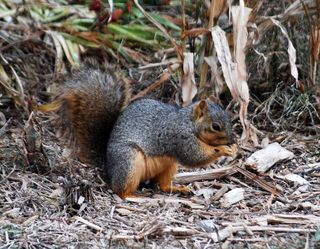 SquirrelDec11c