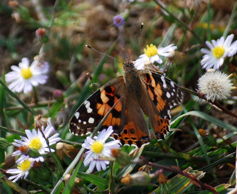 ButterflyNov6