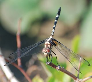 DragonflyJun10
