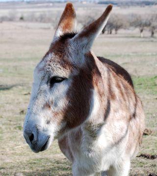 DonkeyJan1a