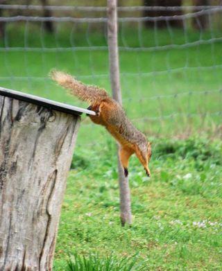 SquirrelMar20