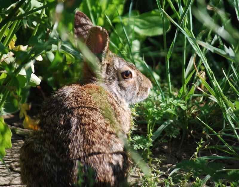RabbitApr6a