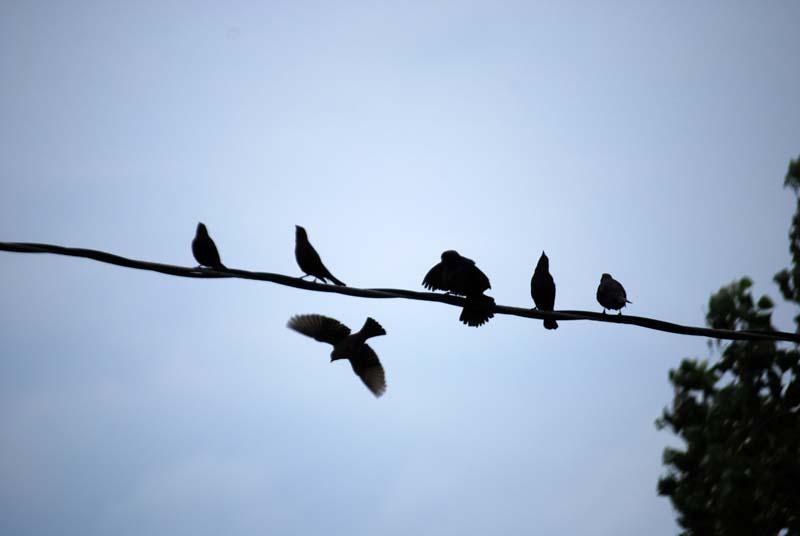 BirdswaitingApr113a