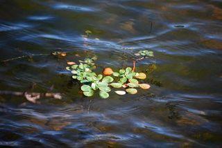 LeaveswaterApr18