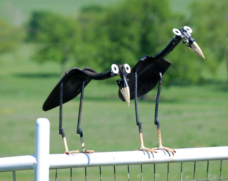 Fencebirds