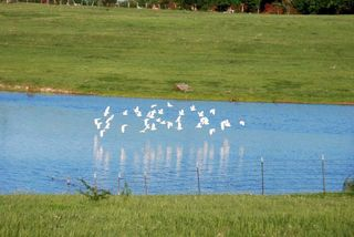 WhitebirdsApr22c