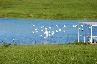 WhitebirdsApr22d