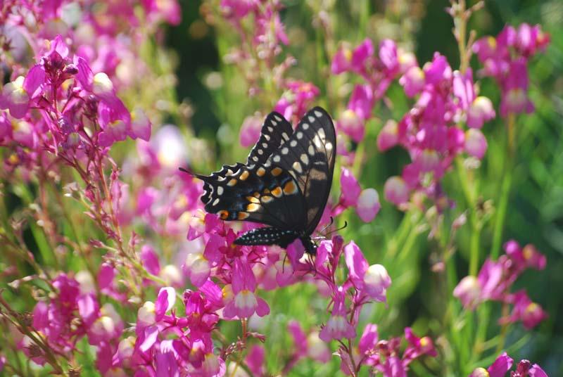ButterflyApr24