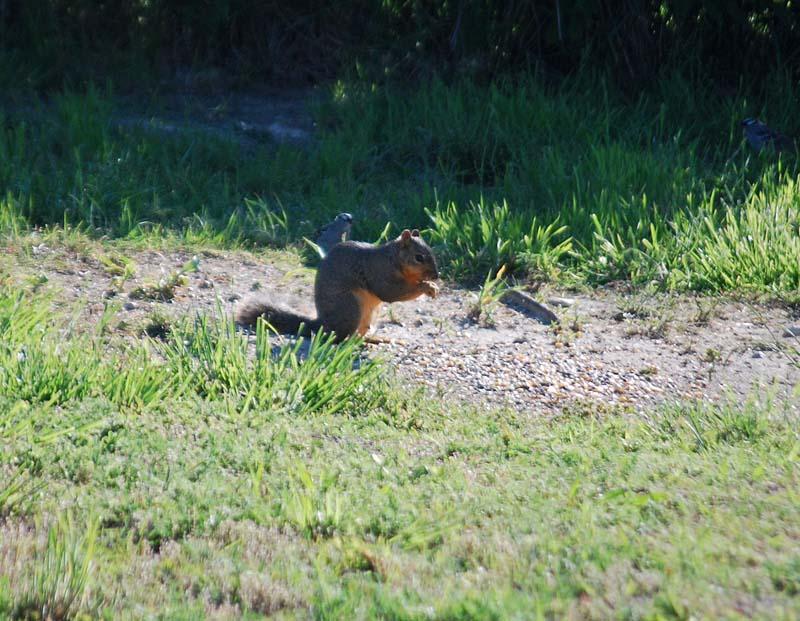 SquirrelApr24