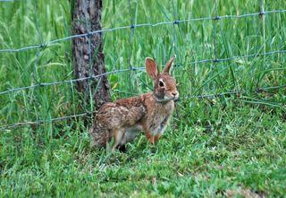 RabbitMay13a