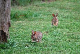 RabbitMay13e