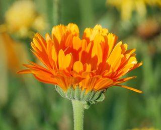 OrangeMay14