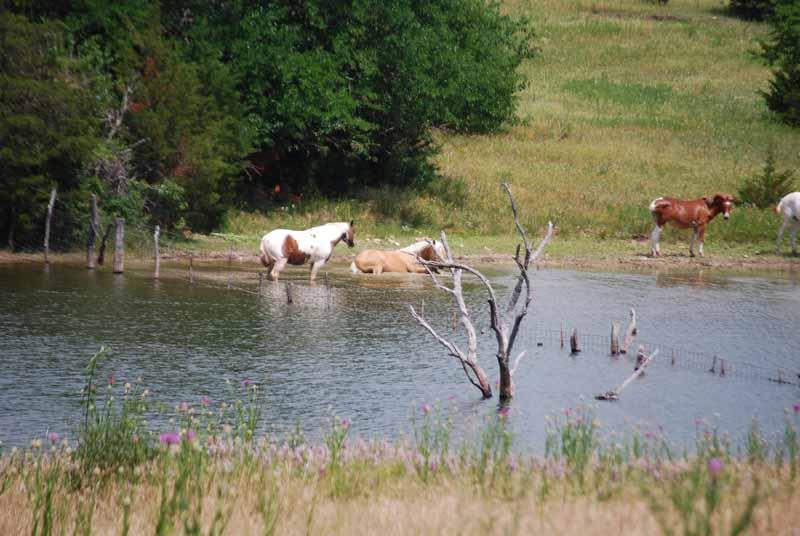 HorsesJun2d