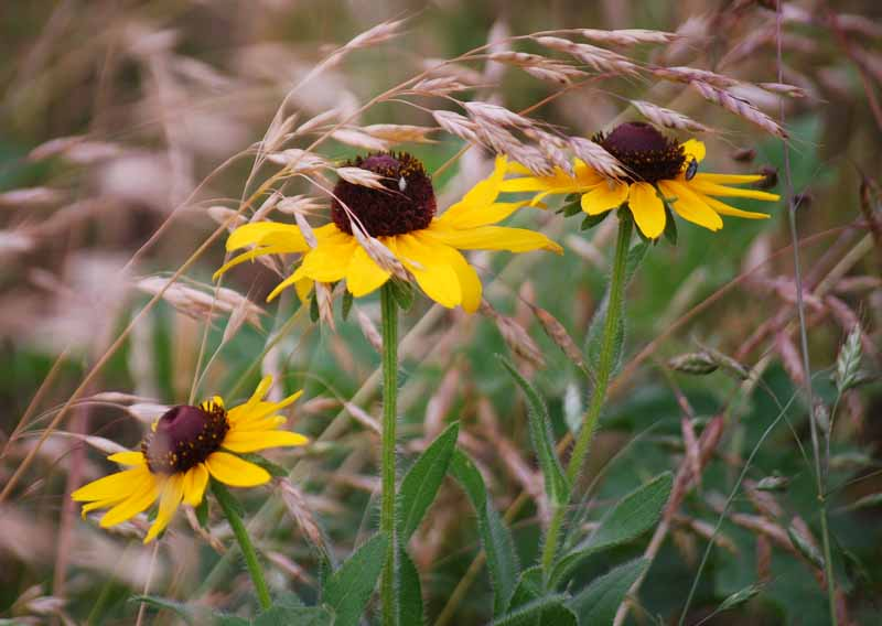 WildflowersJun7