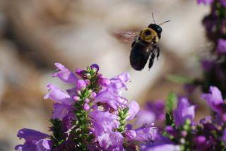 BeeflyOct2