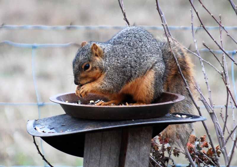 SquirrelDec26