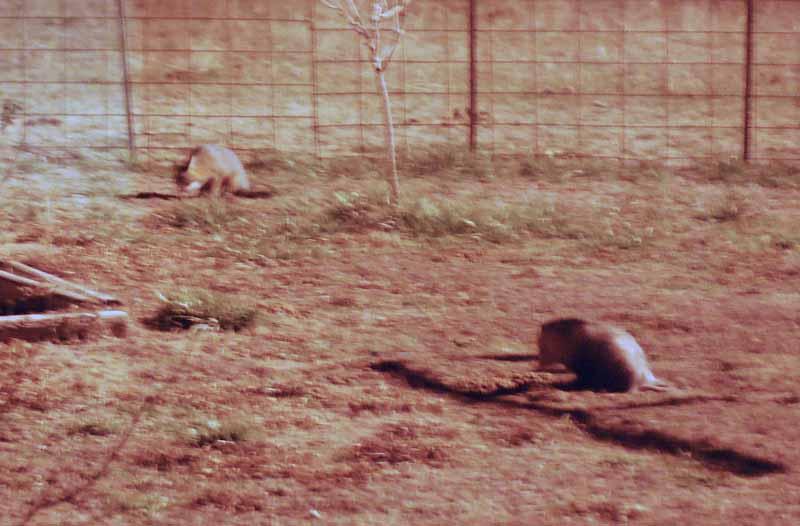 FoxopossumDec28
