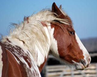 HorseDec31c