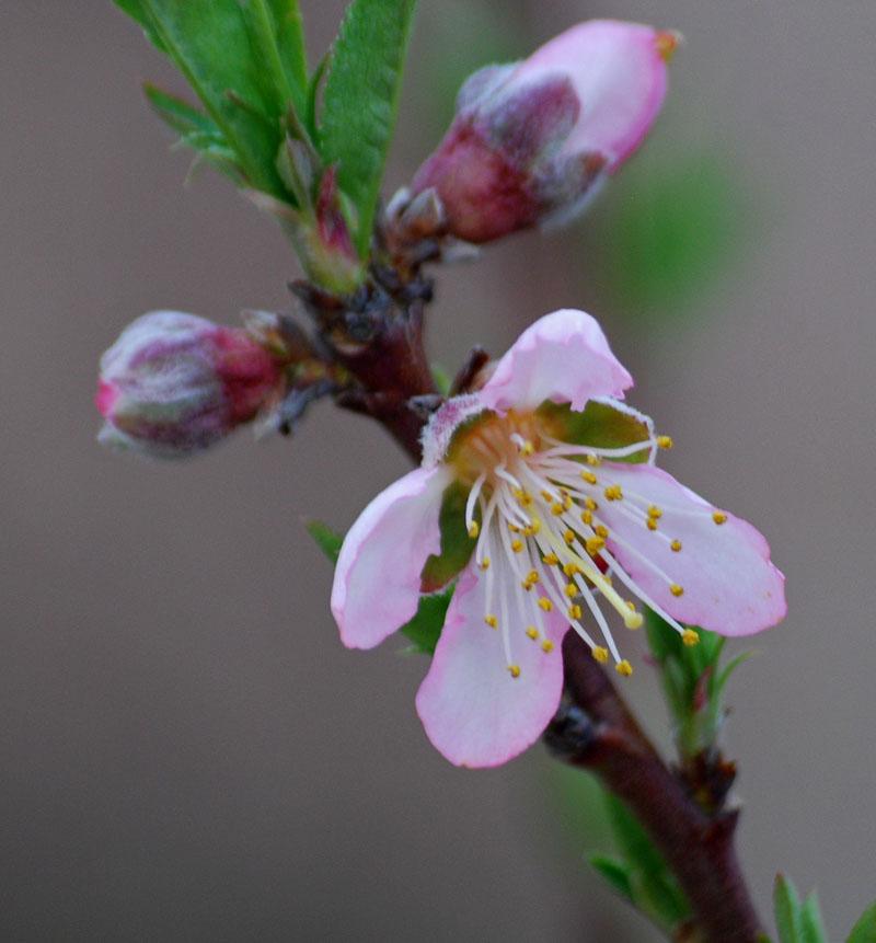 BlossomFeb2_edited-1