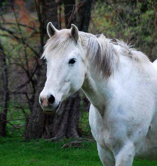 HorseMar18