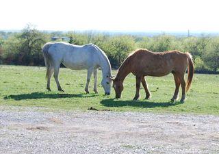 HorsesMar26