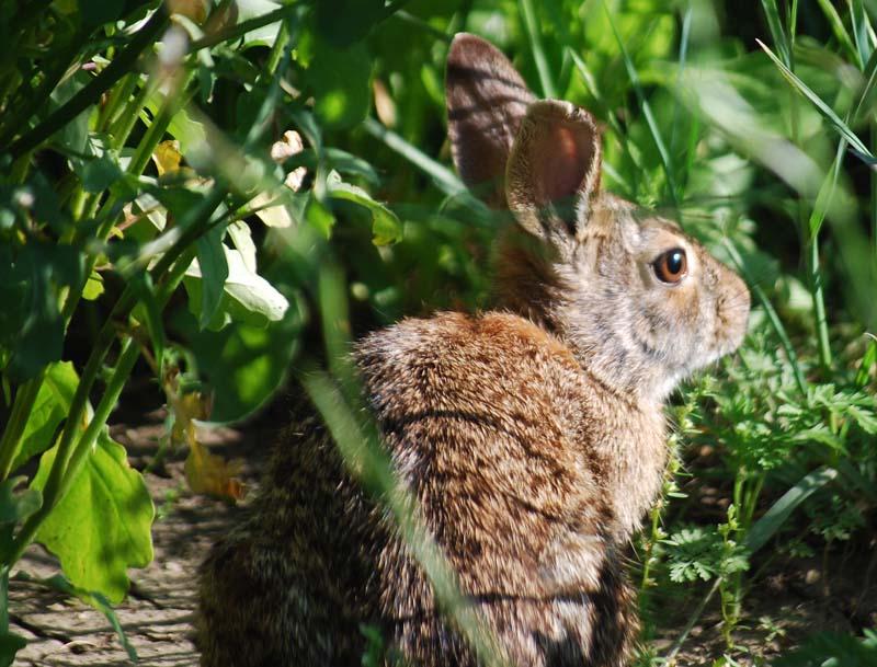 RabbitApr6b