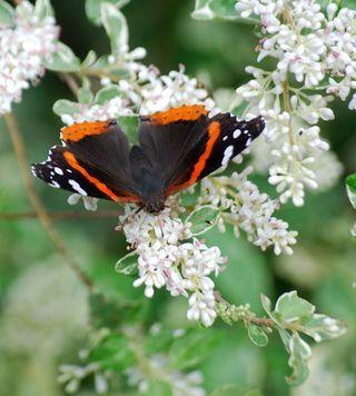 ButterflyApr15d