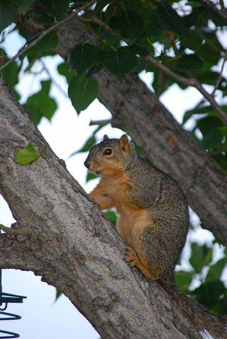 SquirrelJun2e