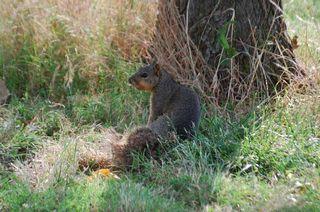 SquirrelJun5