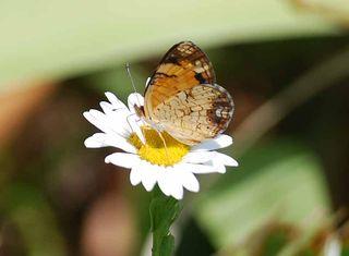 ButterflyJul10a