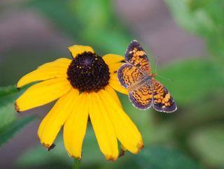 ButterflyJul20