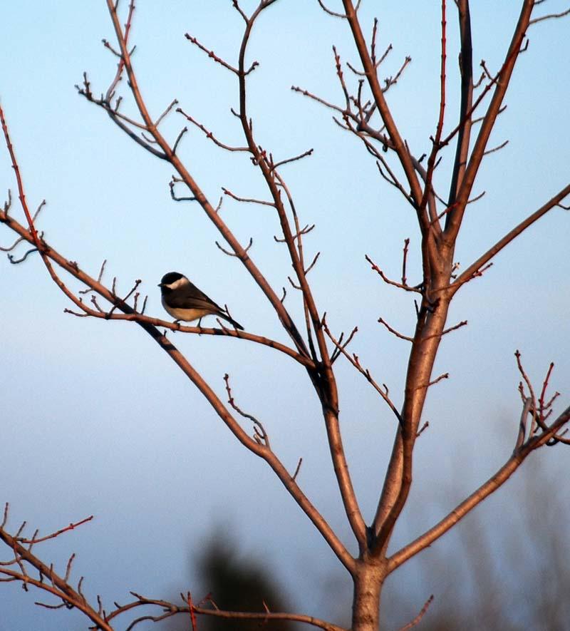 BirdFeb15