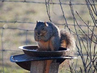 SquirrelFeb25a