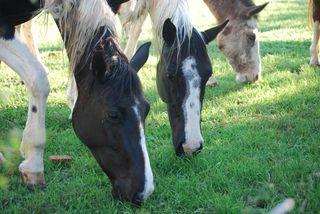 HorsesMar24