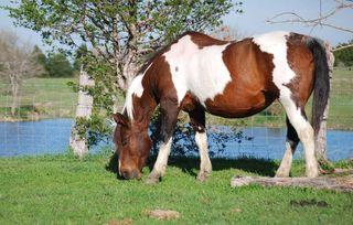 HorseMar26a