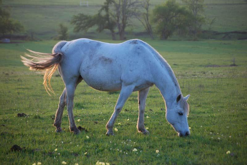 WhitehorseMar31