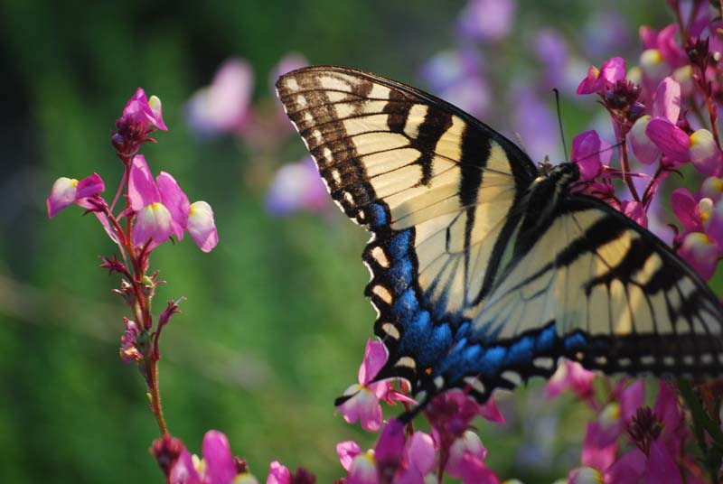 ButterflyMar31b