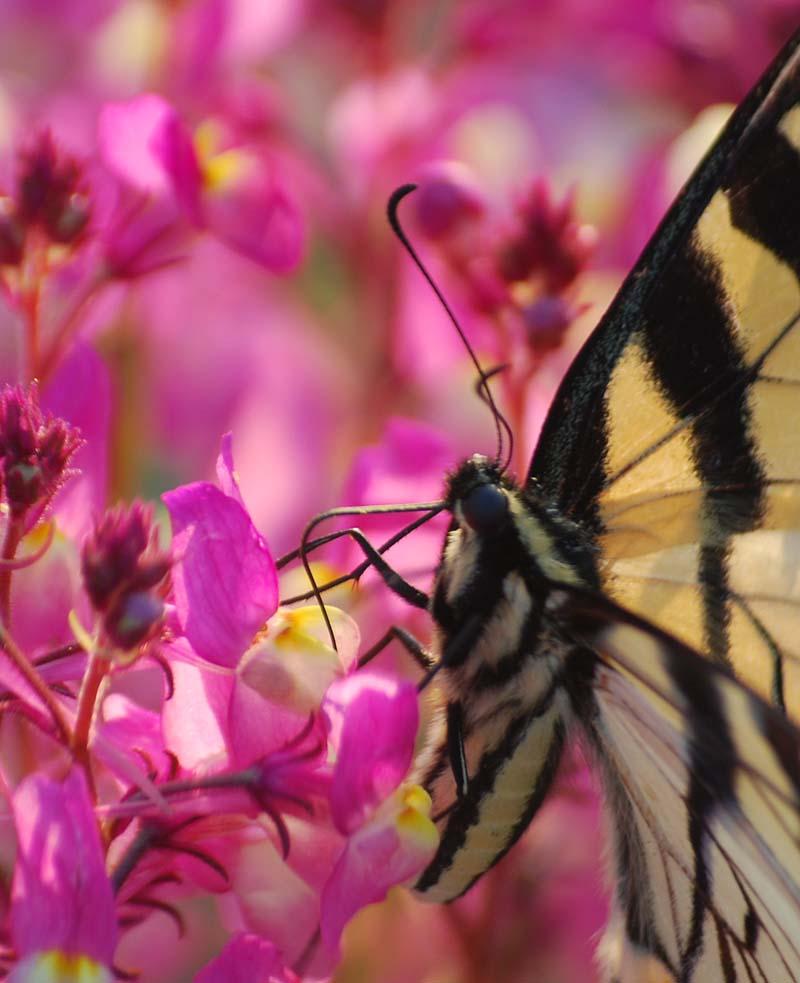 ButterflyMar31g