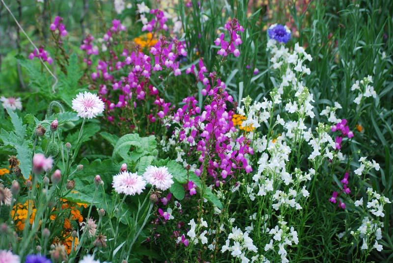 FlowerbedApr13