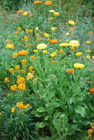 FlowerbedApr13a