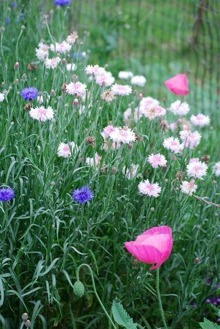 FlowerbedApr13b