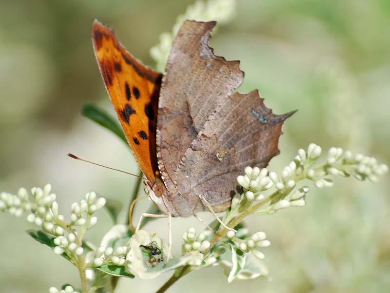 ButterflyApr17a