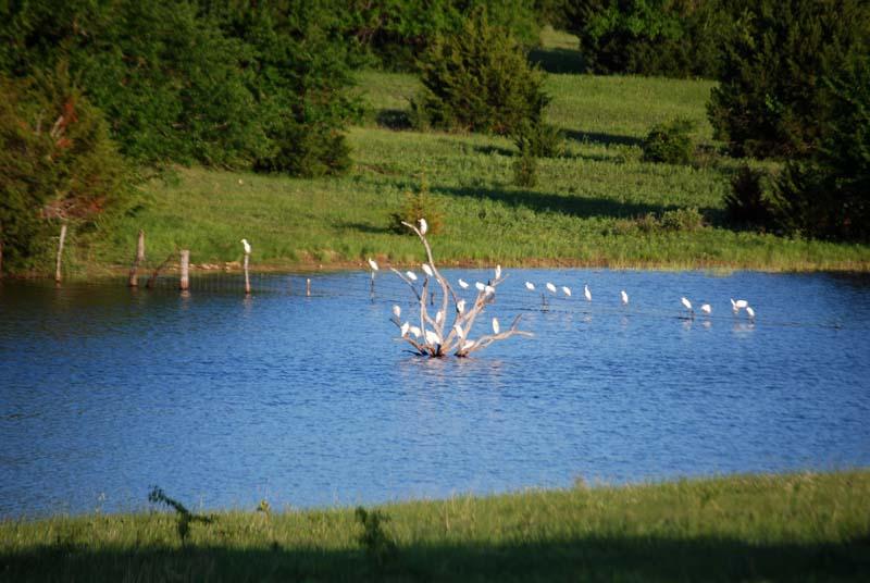 WhitebirdsApr22f