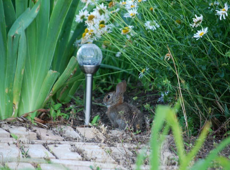 RabbitApr23